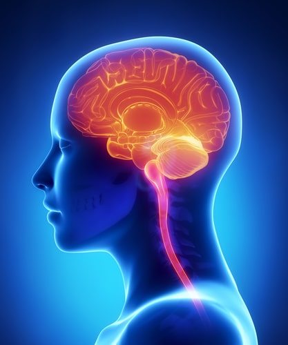How Brain Neurotransmitters Make It Easier or Harder to Control Your Appetite