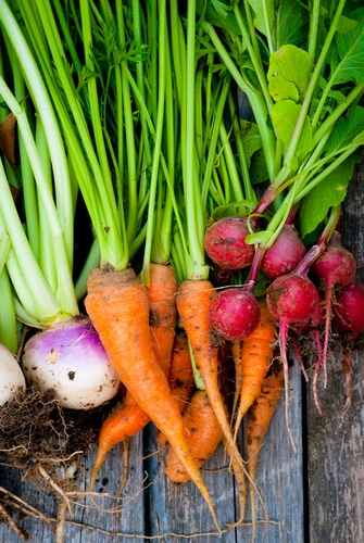 Discover the New Health Benefits of Root Vegetables