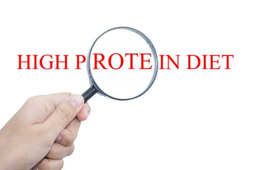 High-Protein Diets: What Effect Do They Have on Metabolism?