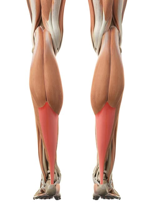 Can You Strengthen Your Tendons?