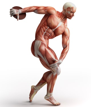 muscle-fiber type and athletic performance