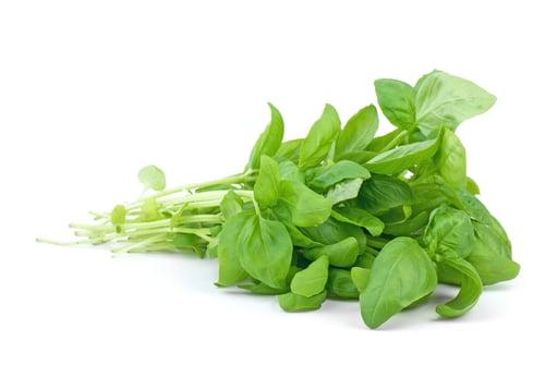 Nine Fascinating Health Benefits of Basil