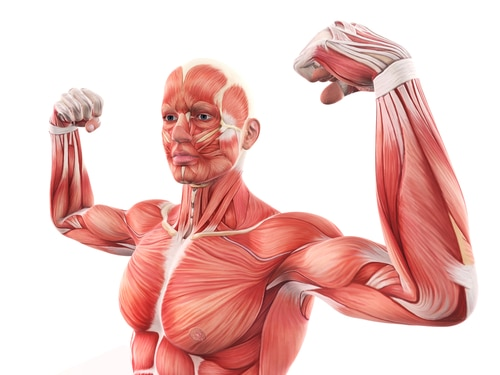5 Hormones That Impact Muscle Growth and How They Work