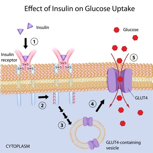 Are You at Risk for Insulin Resistance?