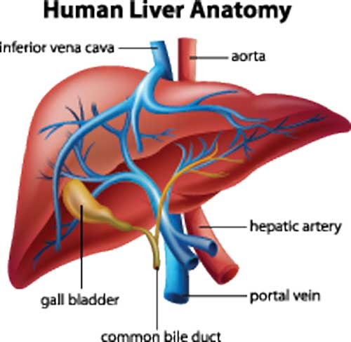 Eating for a healthier liver to prevent liver disease