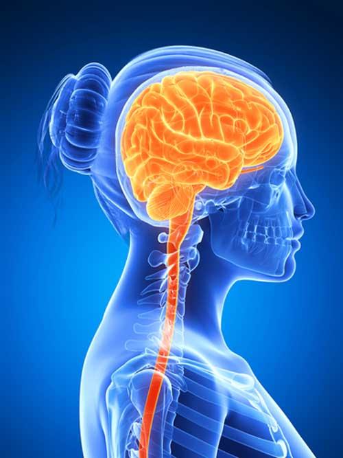 Do women's brains age more slowly than men's?