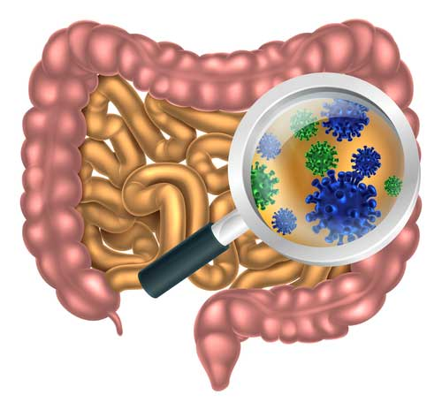 3 Ways Gut Bacteria Affect Body Weight