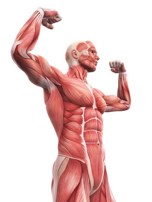 What is fascia and connective tissue and how does it Impact your fitness training?