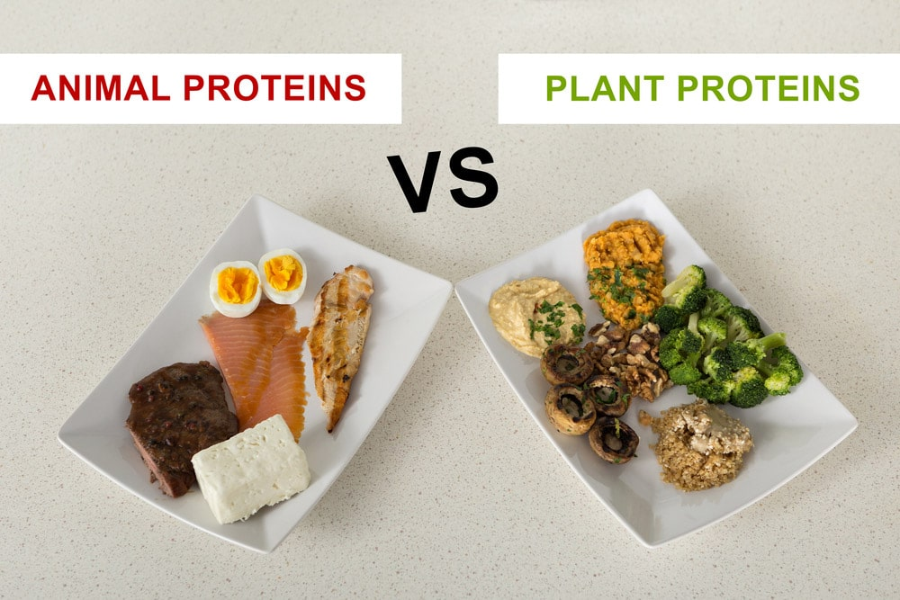 What Type of Protein Keeps You Full the Longest?
