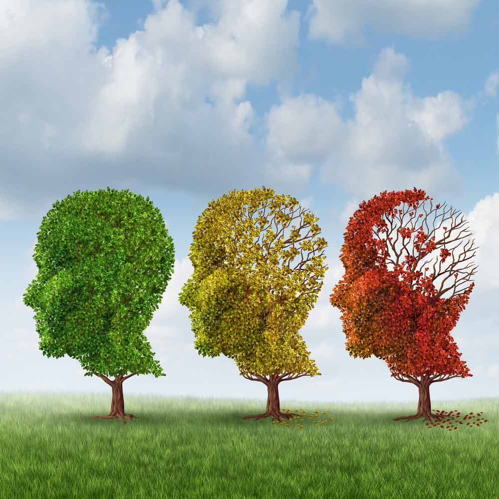 image of three trees with vanishing leaves to illustrate Alzheimer's Disease