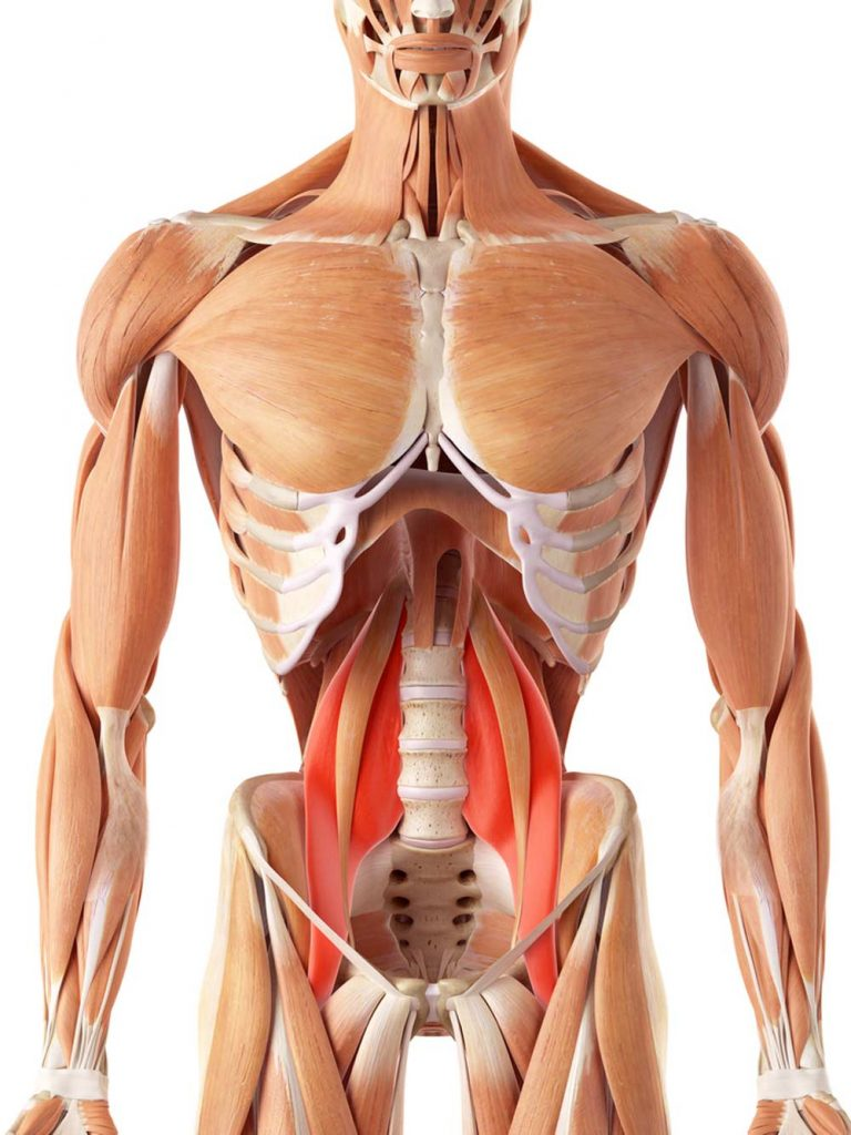 image showing location of the psoas muscle group