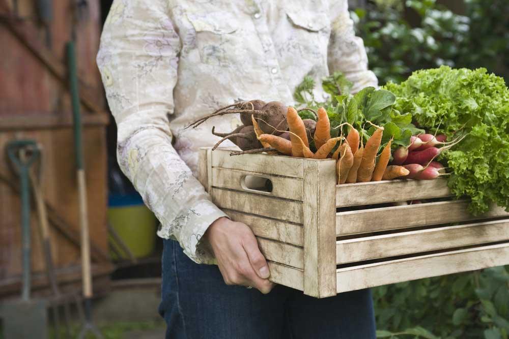 Is organic food really organic?