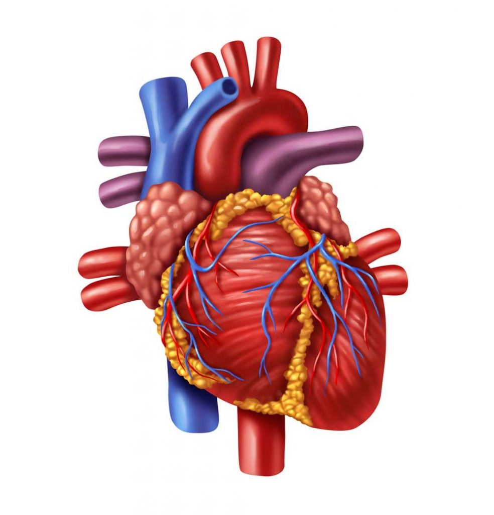 Does exercise hurt or help to prevent atrial fibrillation.