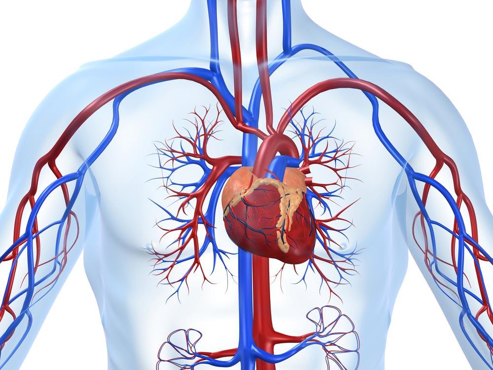 Women and cardiovascular disease