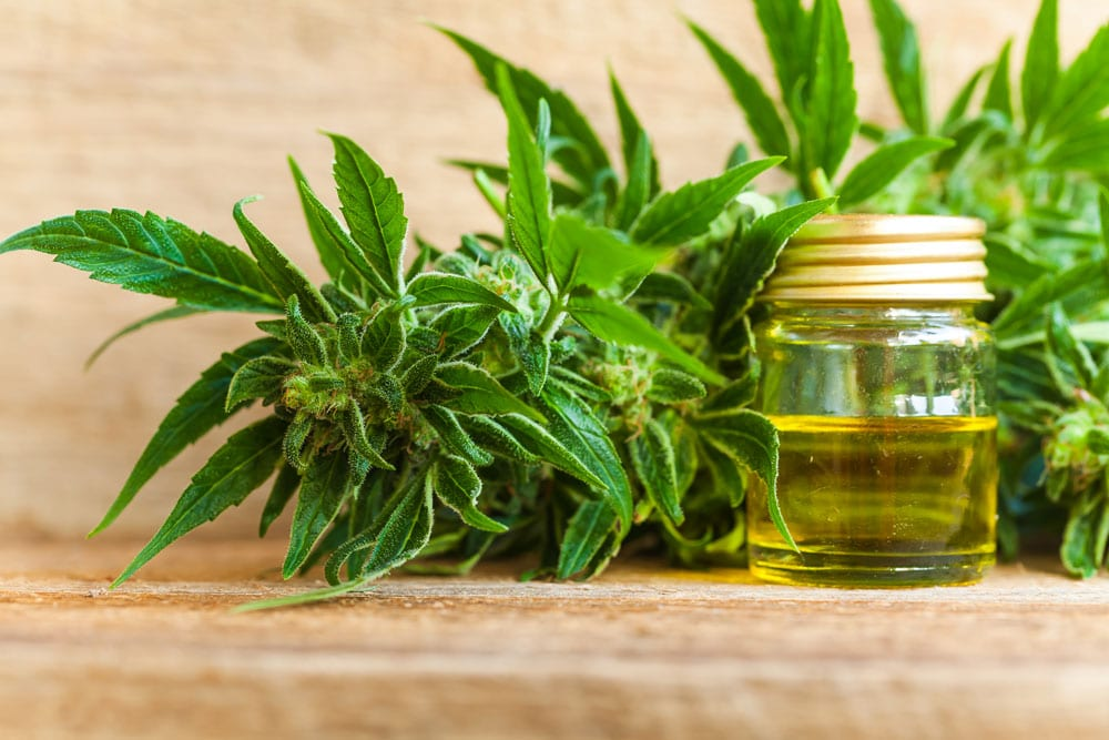 Cannabidiol oil is just one of the 2019 fitness and wellness trends