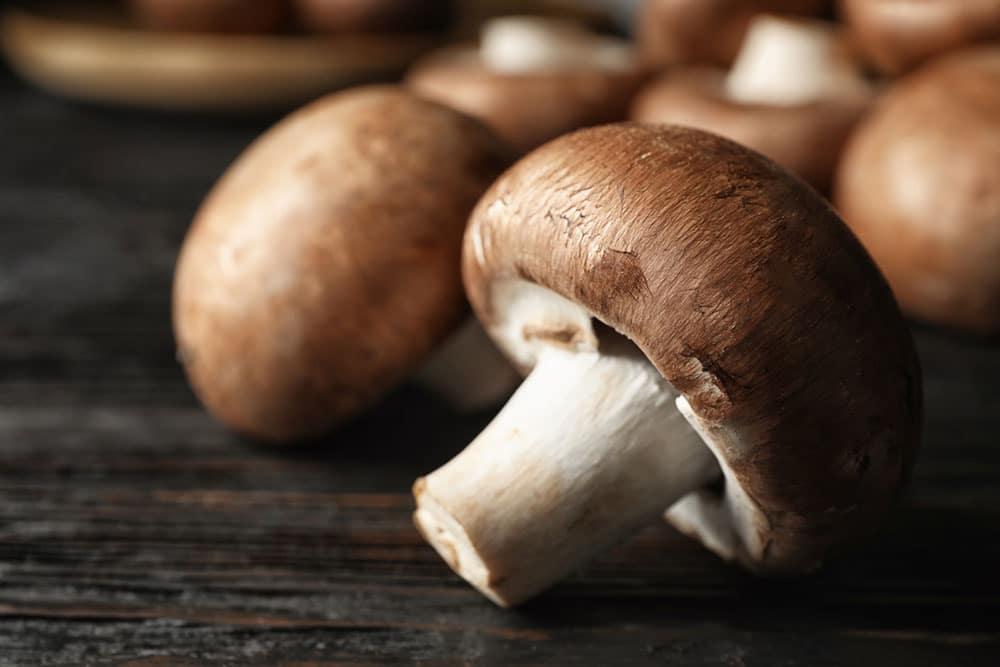 Mushrooms & Brain Health